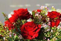 300-x-200-roses-3996953_640